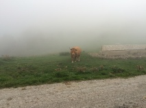 ... and alpine cows!