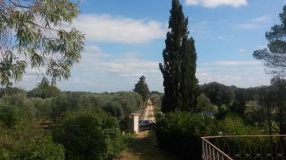 Villa Giustini driveway and olives
