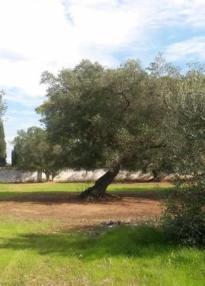 Villa Giustini rear garden2